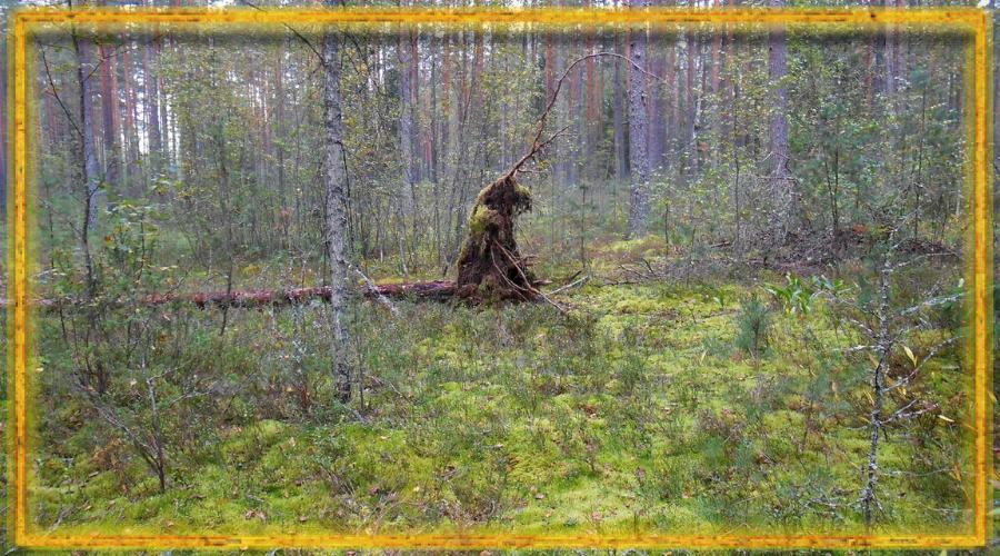 леший, лес, лесовик, как задобрить лешего