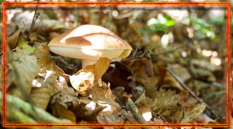 заговор в лесу, грибные песни